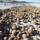 NeptuTherm - Neptunbälle am Strand