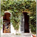 Ein grüner Mantel fürs Haus: Efeu und Co. an Hauswänden sind im Trend