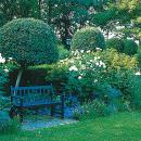 Schmuck für kleine Gärten: So wachsen einem Bäume nicht über den Kopf